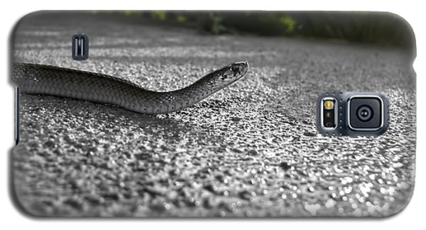 Snake In The Sun Galaxy S5 Case