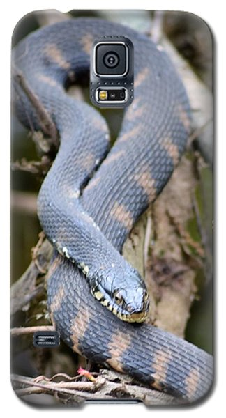 Snakes In The Trees Galaxy S5 Case