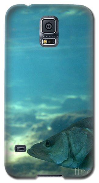 Snook Face Galaxy S5 Case