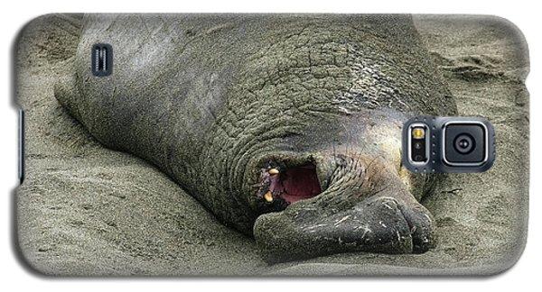 Snoring Elephant Seal Galaxy S5 Case