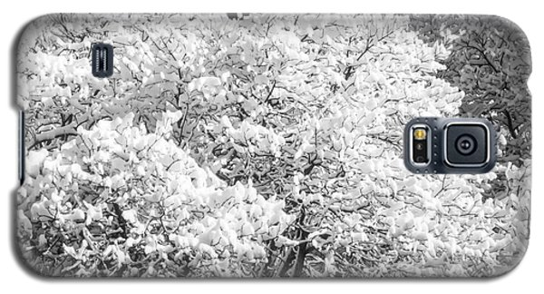 Snow And Frost On Trees In Winter Galaxy S5 Case