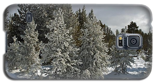 Snow And Ice Covered Evergreens At Sunset Lake  Galaxy S5 Case