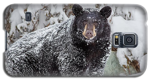 Snow Bear Stare Galaxy S5 Case