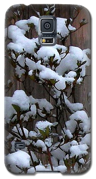Galaxy S5 Case featuring the photograph Snow Bush Abstract by Skyler Tipton