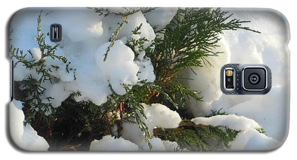 Galaxy S5 Case featuring the photograph Snow Covered Evergreen by Rockin Docks Deluxephotos