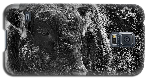 Snow Covered Ice Bull Galaxy S5 Case