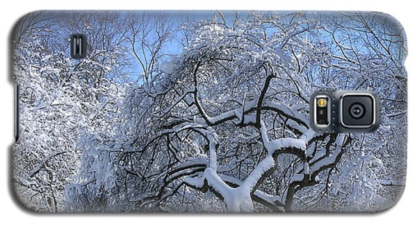 Galaxy S5 Case featuring the photograph Snow-covered Sunlit Apple Trees by Byron Varvarigos