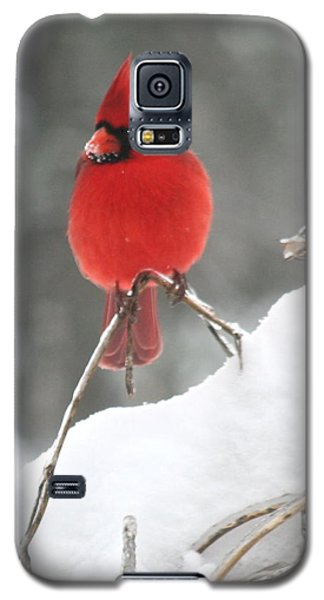 Galaxy S5 Case featuring the photograph Snow Day by Diane Merkle