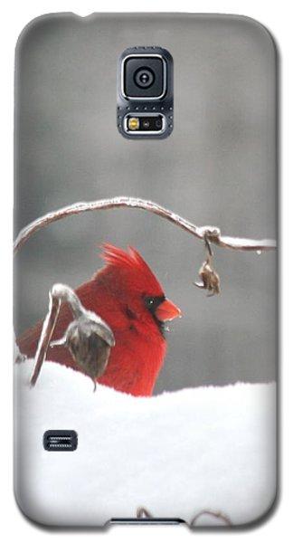 Snow Day II Galaxy S5 Case