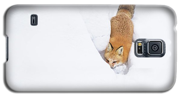 Galaxy S5 Case featuring the photograph Snow-diving Fox  by Mircea Costina Photography