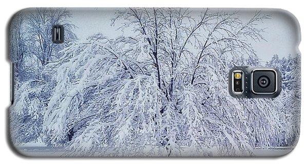 Snow Encrusted Tree Galaxy S5 Case