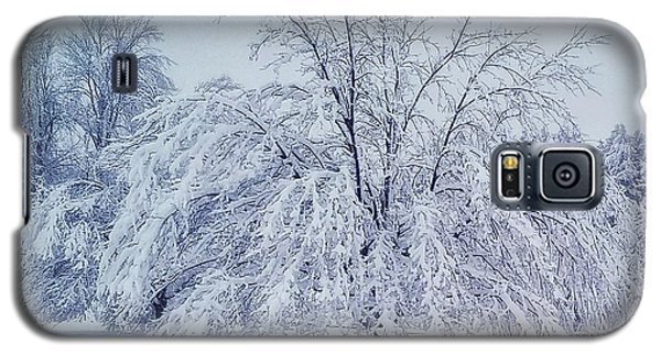 Snow Encrusted Tree Galaxy S5 Case