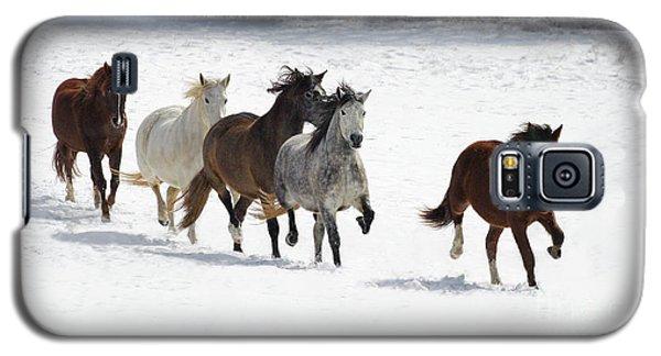 Snow Gallop Galaxy S5 Case