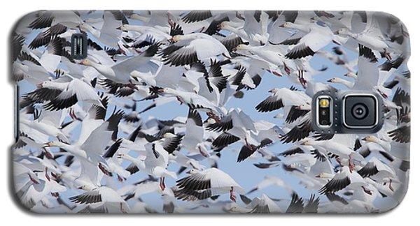 Snow Geese Galaxy S5 Case