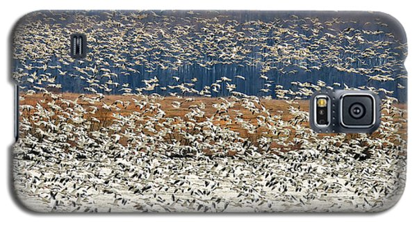 Galaxy S5 Case featuring the photograph Snow Geese At Willow Point by Lois Bryan
