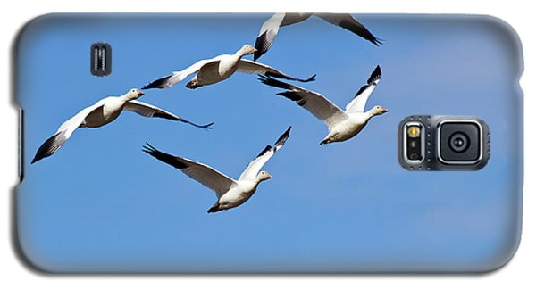 Galaxy S5 Case featuring the photograph Snow Geese Flormation by Elvira Butler
