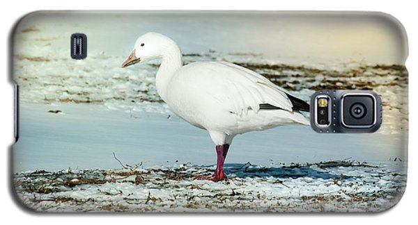 Galaxy S5 Case featuring the photograph Snow Goose - Frozen Field by Robert Frederick