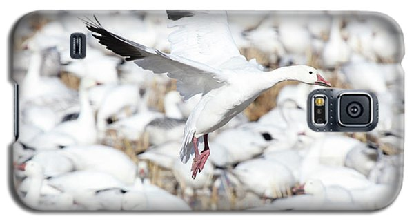 Snow Goose Lift-off Galaxy S5 Case