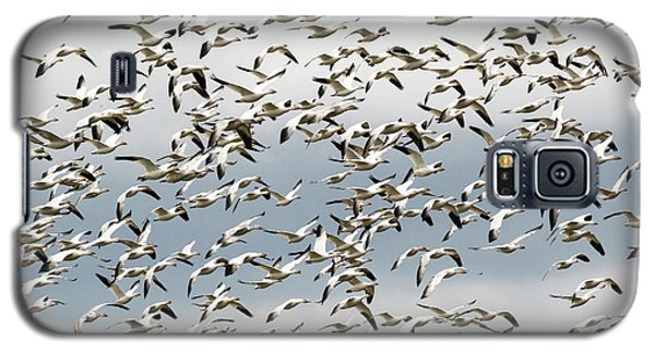 Galaxy S5 Case featuring the photograph Snow Goose Storm by Mike Dawson