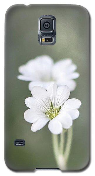 Snow In Summer Galaxy S5 Case