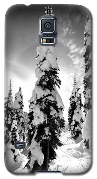 Snow Laden Tree Galaxy S5 Case