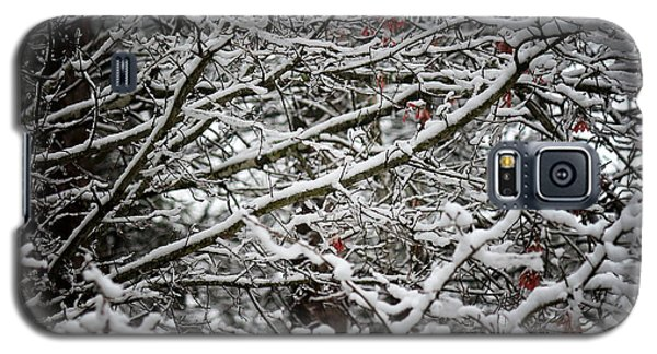 Snow Laden Trees Galaxy S5 Case