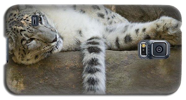 Snow Leopard Nap Galaxy S5 Case by Mike  Dawson