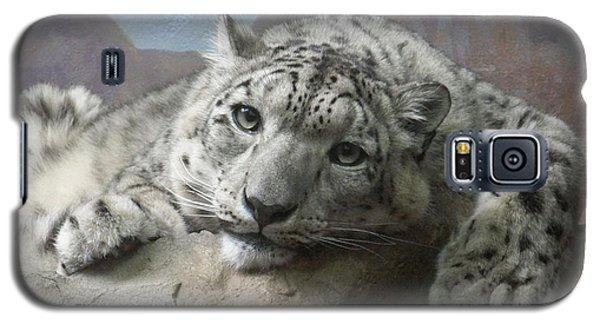 Snow Leopard Relaxing Galaxy S5 Case