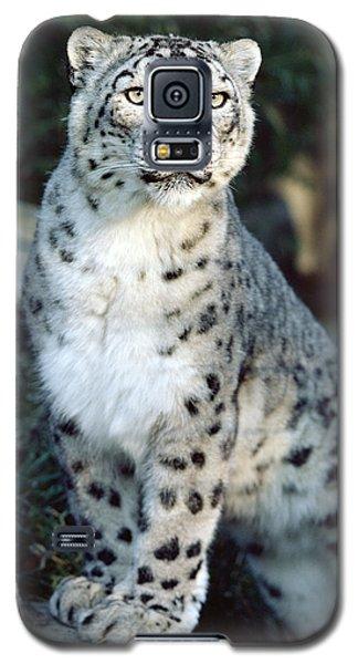 Snow Leopard Uncia Uncia Portrait Galaxy S5 Case