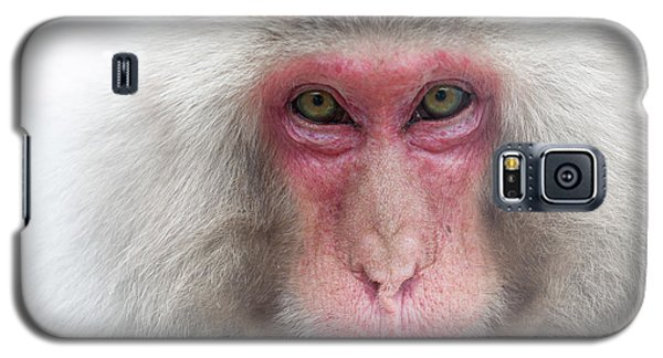 Galaxy S5 Case featuring the photograph Snow Monkey Consideration by Rikk Flohr
