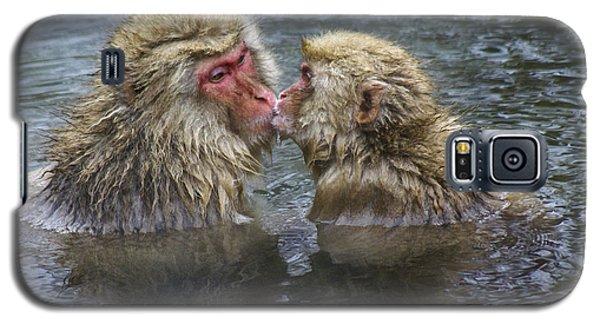 Snow Monkey Kisses Galaxy S5 Case