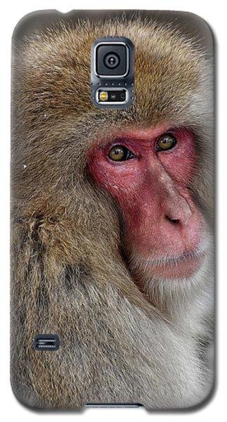 Snow Monkey Galaxy S5 Case
