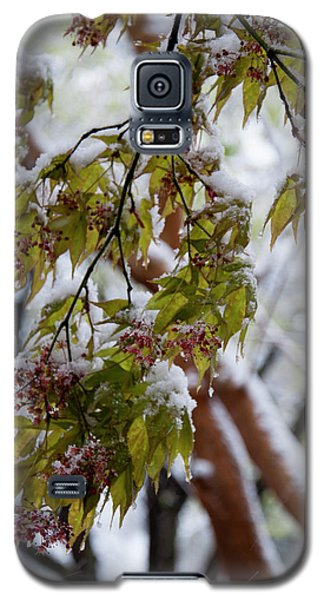 snow on the Cherry blossoms Galaxy S5 Case by Chris Flees