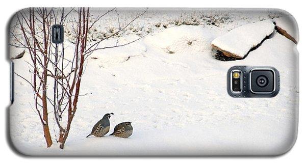 Snow Quail Galaxy S5 Case