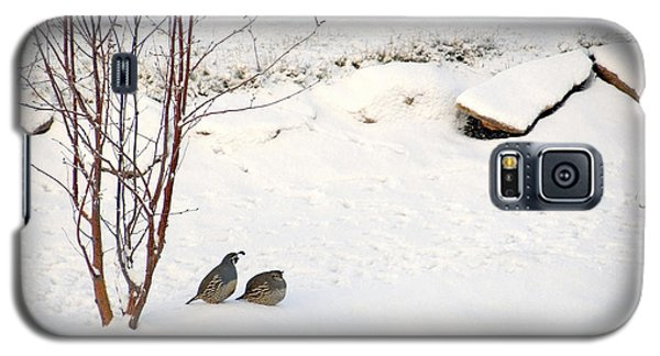 Snow Quail Galaxy S5 Case