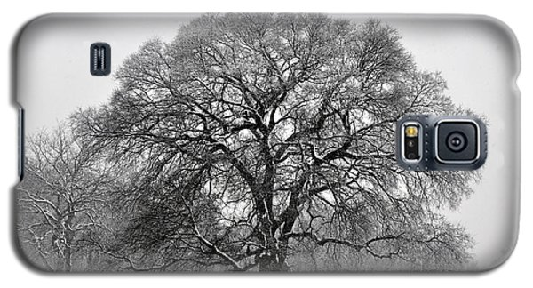 Snow Tree 2 Galaxy S5 Case
