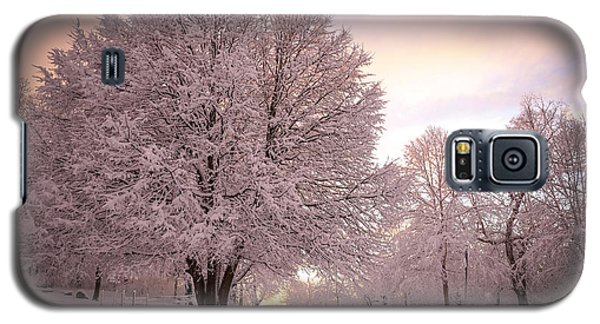 Snow Tree At Dusk Galaxy S5 Case