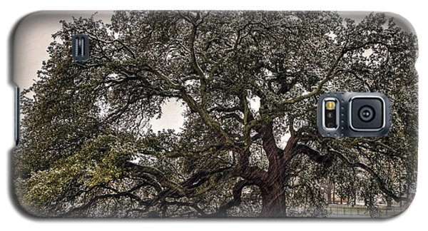 Snowfall On Emancipation Oak Tree Galaxy S5 Case