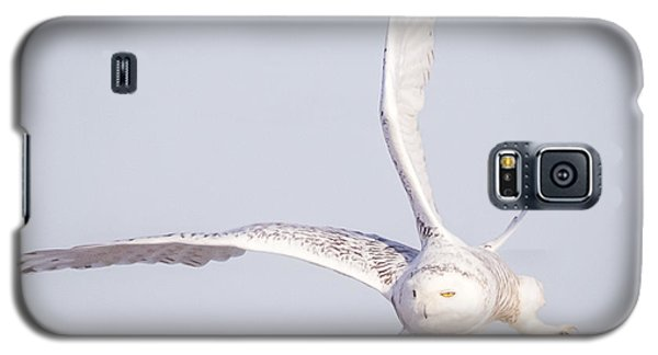 Snowy Owl Flying Dirty Galaxy S5 Case