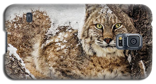 Snowy Bobcat Galaxy S5 Case