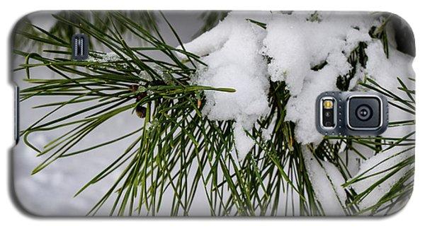 Snowy Branch Galaxy S5 Case