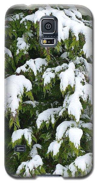 Galaxy S5 Case featuring the photograph Snowy Cedar Boughs by Will Borden