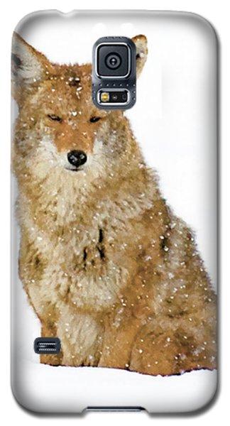 Snowy Coyote Galaxy S5 Case