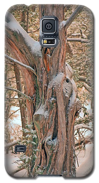 Galaxy S5 Case featuring the photograph Snowy Dead Tree by Donna Greene