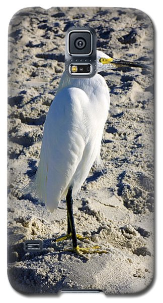 Snowy Egret At Naples, Fl Beach Galaxy S5 Case