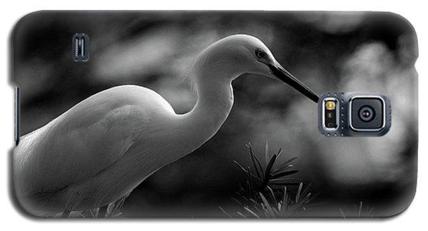 Snowy Egret Bw Galaxy S5 Case by Travis Burgess
