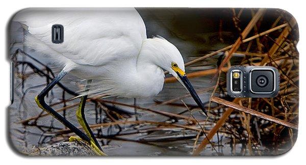 Snowy Egret Egretta Galaxy S5 Case