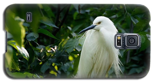 Snowy Egret In The Trees Galaxy S5 Case