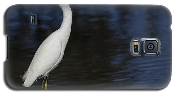Snowy Egret Perched On A Rock Galaxy S5 Case