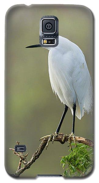 Snowy Egret Portrait Galaxy S5 Case